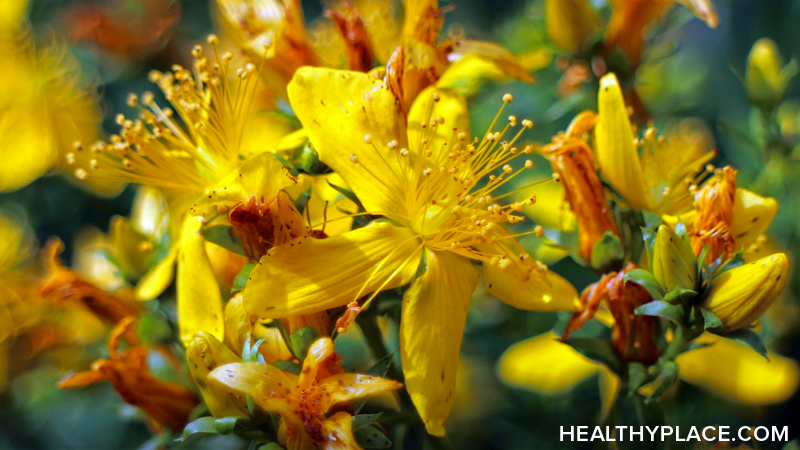 St. John's Wort is an alternative mental health herbal treatment for mild to moderate depression. Learn about the usage, dosage, side-effects of St. John's Wort.