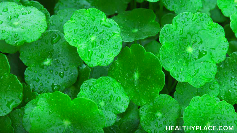 Gotu kola is an herbal remedy used to ease anxiety and treat mental fatigue and insomnia. Learn about the usage, dosage, side-effects of Gotu kola.